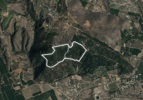 90 Acres of Avocado Grove, Pauma Valley, California